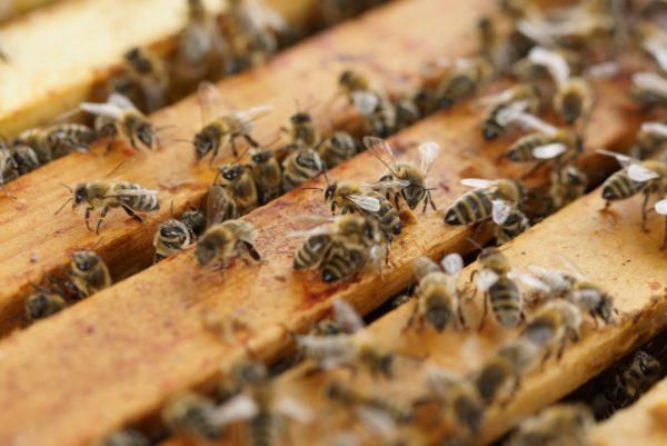 beehive 1143380 1920