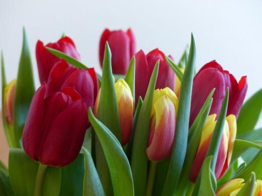 1 5 тюльпанов в букете, ТОП продаж