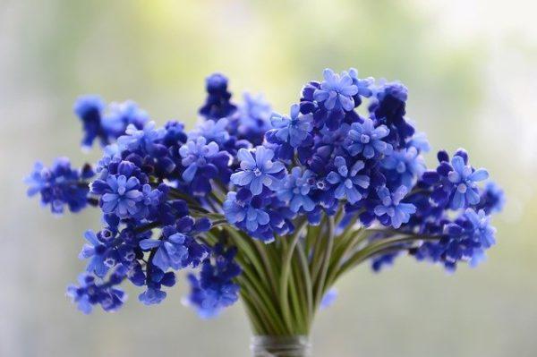 Находим и доставляем всевозможные цветы
